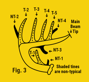 shaded tines are non typical