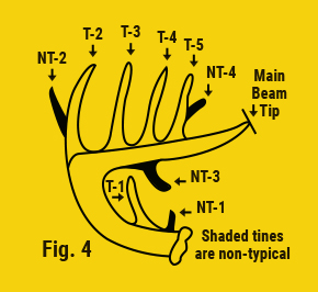 main beam tip shaded tines are non typical
